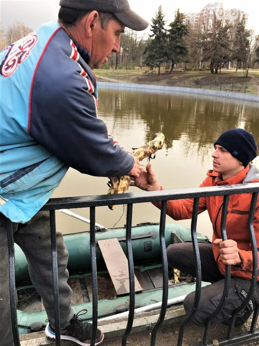 В Одессе на пруду в парке Победы расцветут кувшинки,- ФОТО, фото-2