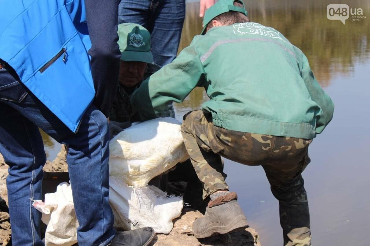 Из одесского зоопарка вернулись в пруд в парке Победы спасённые черепахи и лебедь, - ФОТОРЕПОРТАЖ , фото-10