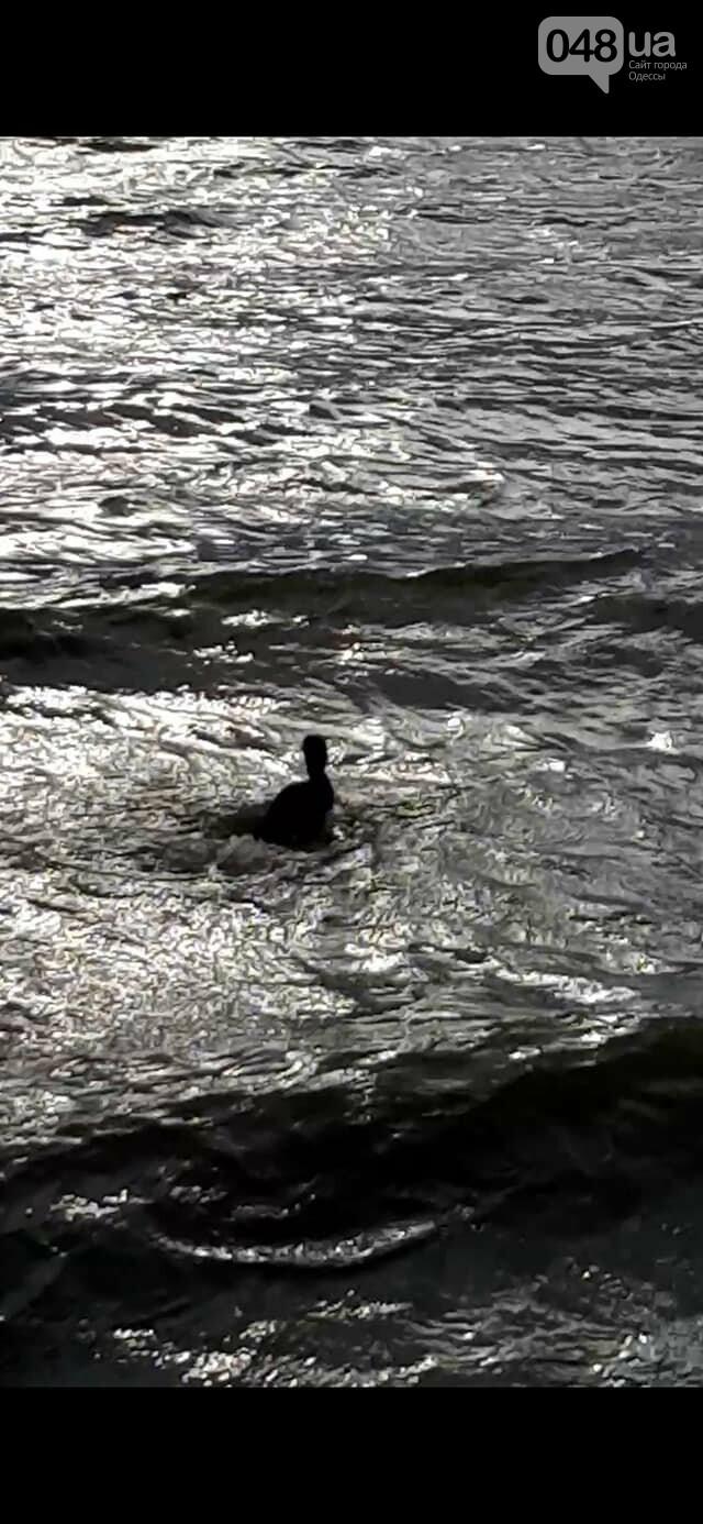 В Одессе спасли птицу, - ФОТО, ВИДЕО, фото-1
