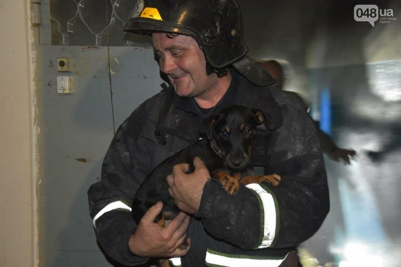 В Одессе горела квартира в 10-этажке, эвакуировали 20 человек и собачку,- ФОТО, фото-1