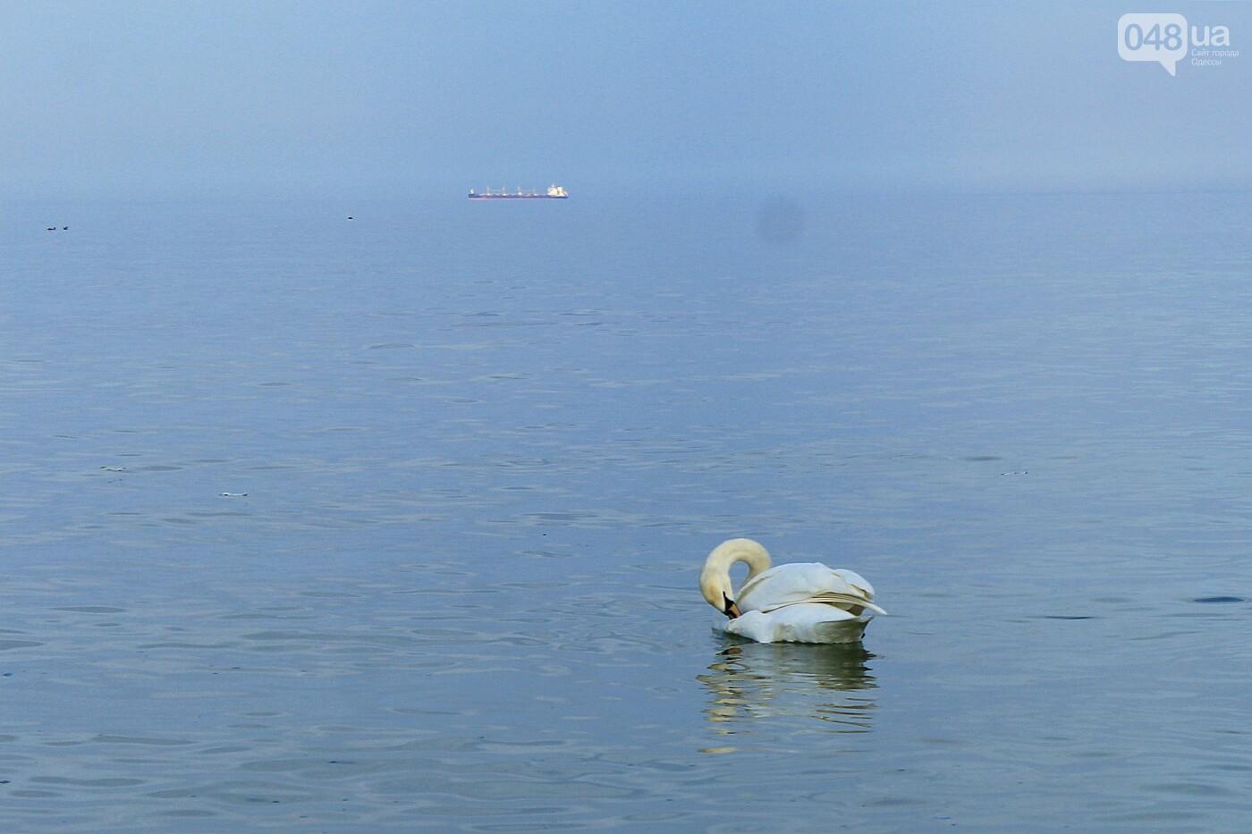 На одесском пляже поселился лебедь, - ФОТО, ВИДЕО, фото-4