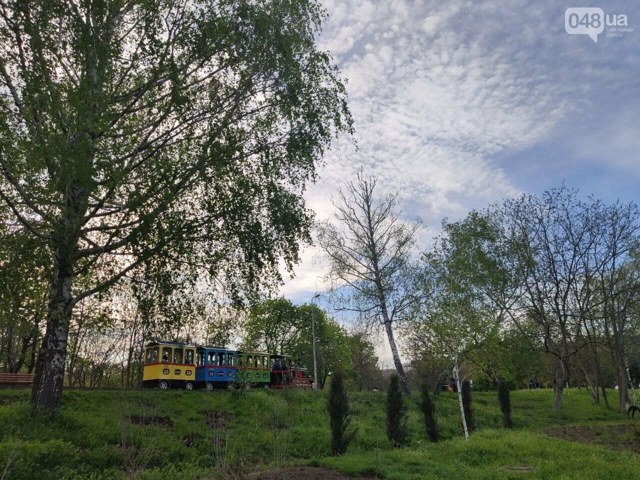Сакура, лебеди и черепахи: сотни одесситов вышли на прогулку в парк Победы, - ФОТОРЕПОРТАЖ, фото-5