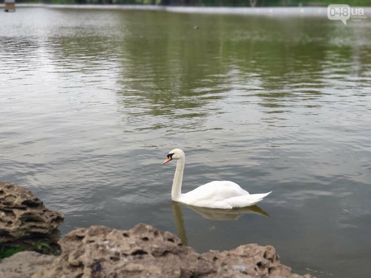 Сакура, лебеди и черепахи: сотни одесситов вышли на прогулку в парк Победы, - ФОТОРЕПОРТАЖ, фото-8