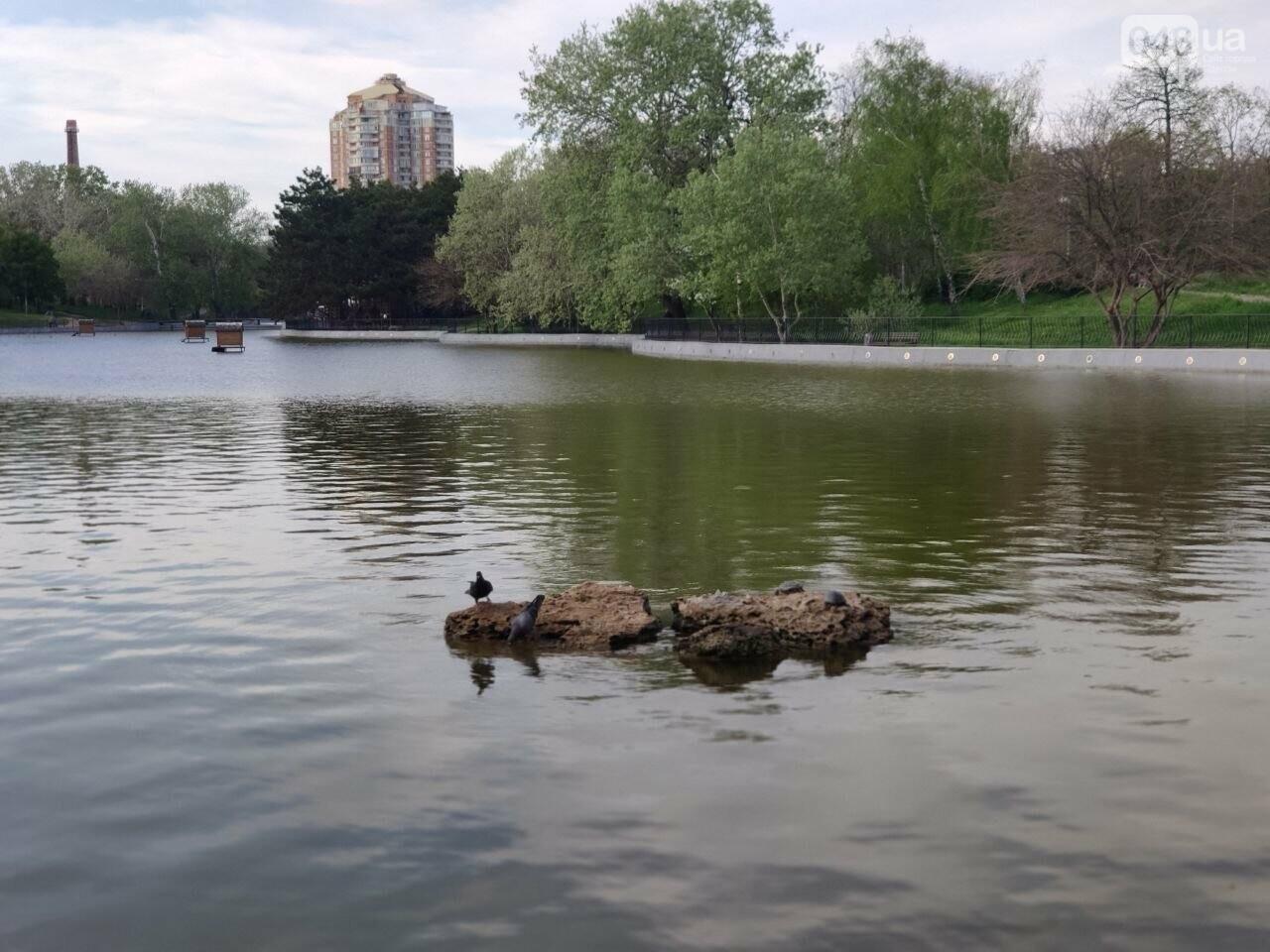 Сакура, лебеди и черепахи: сотни одесситов вышли на прогулку в парк Победы, - ФОТОРЕПОРТАЖ, фото-11
