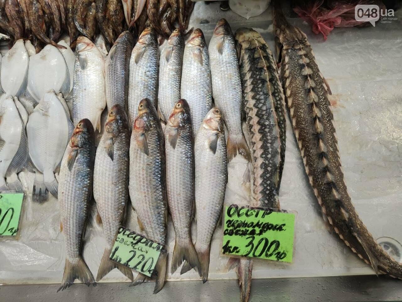 Рапаны, ставрида и кефаль: рыбный четверг на одесском Привозе, - ФОТО, фото-2
