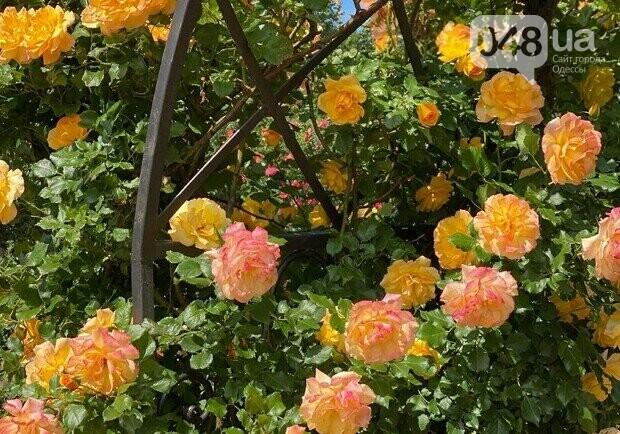 Ботанический сад в Одессе: где и почем туристам полюбоваться розами, фото-3