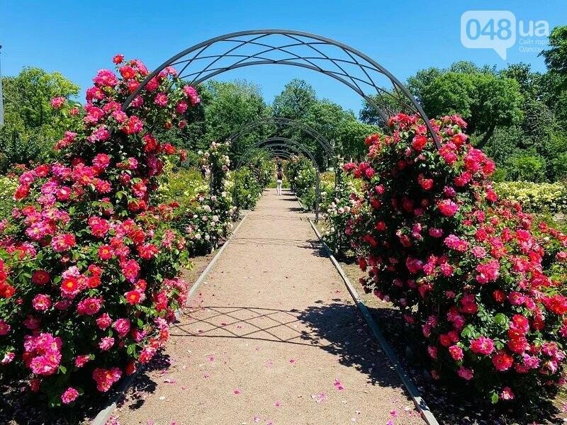 Ботанический сад в Одессе: где и почем туристам полюбоваться розами, фото-1