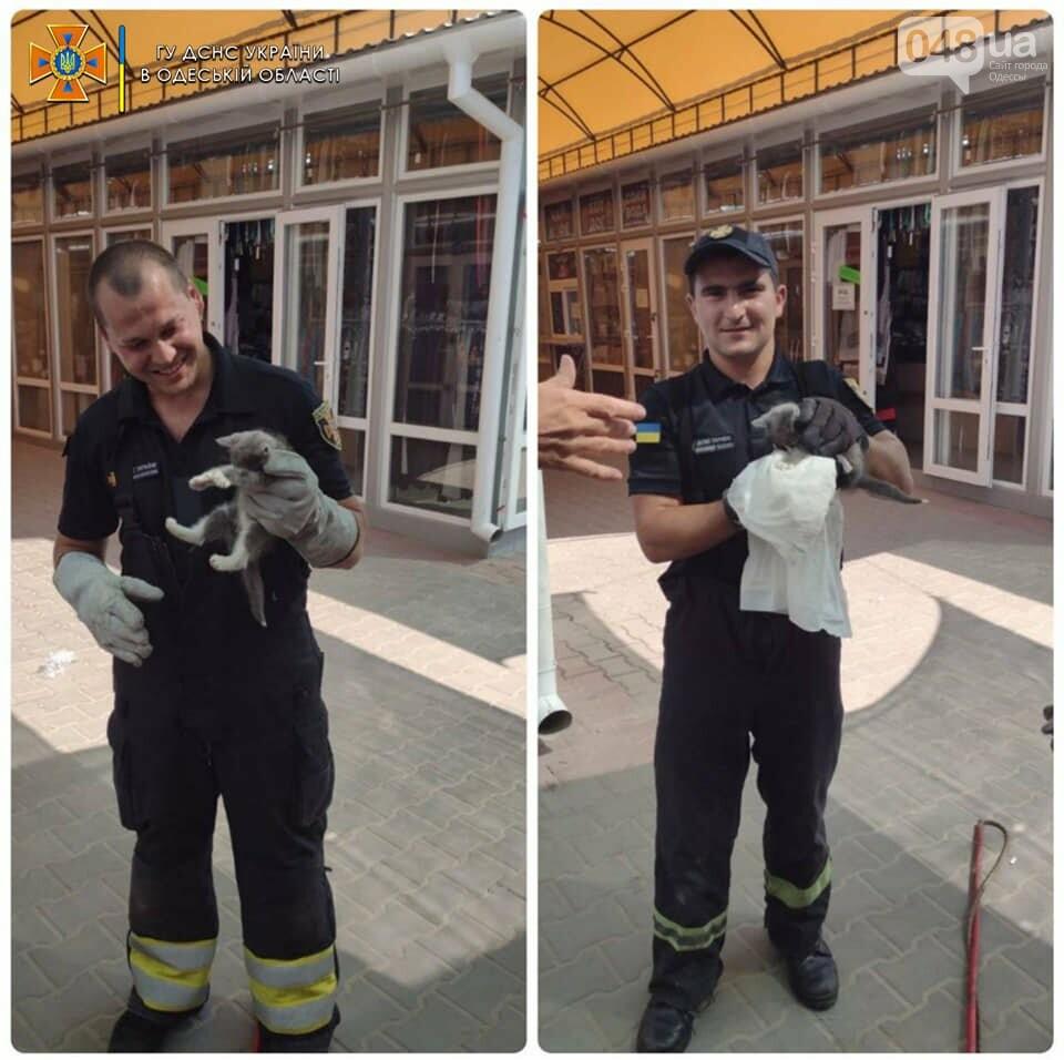 В Одесской области на выходных сотрудники ГСЧС спасали котов, - ФОТО , фото-1