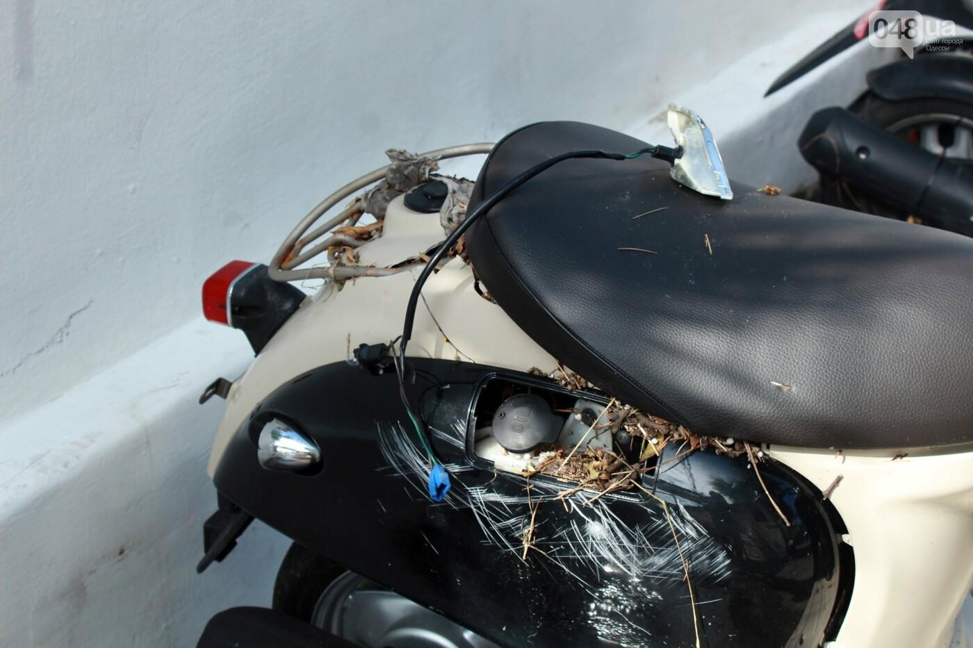 Часть одесской Аркадии буквально смыло в море, - ФОТО, ВИДЕО , фото-24
