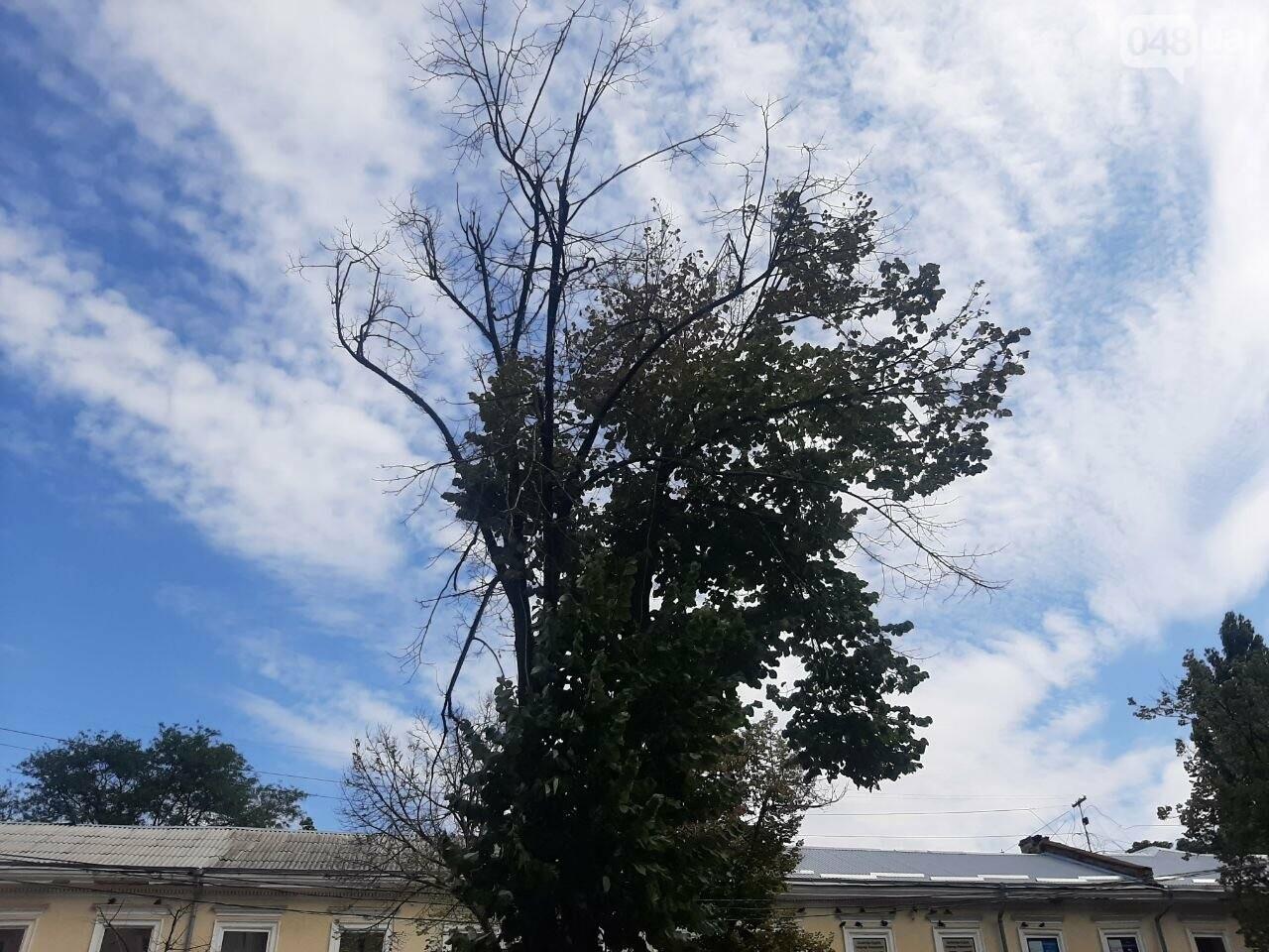 Дерибасовская после ливня в Одессе, - ФОТО, ВИДЕО, фото-8