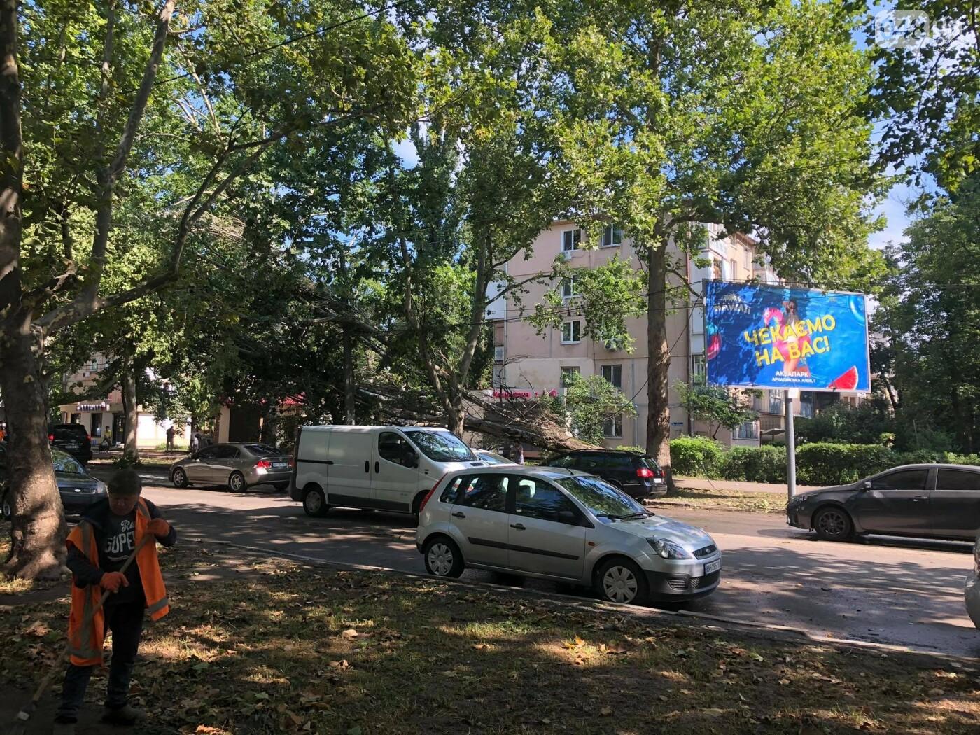 Последствия грозы: упавшее дерево обесточило целую улицу в Одессе, - ФОТО , фото-1
