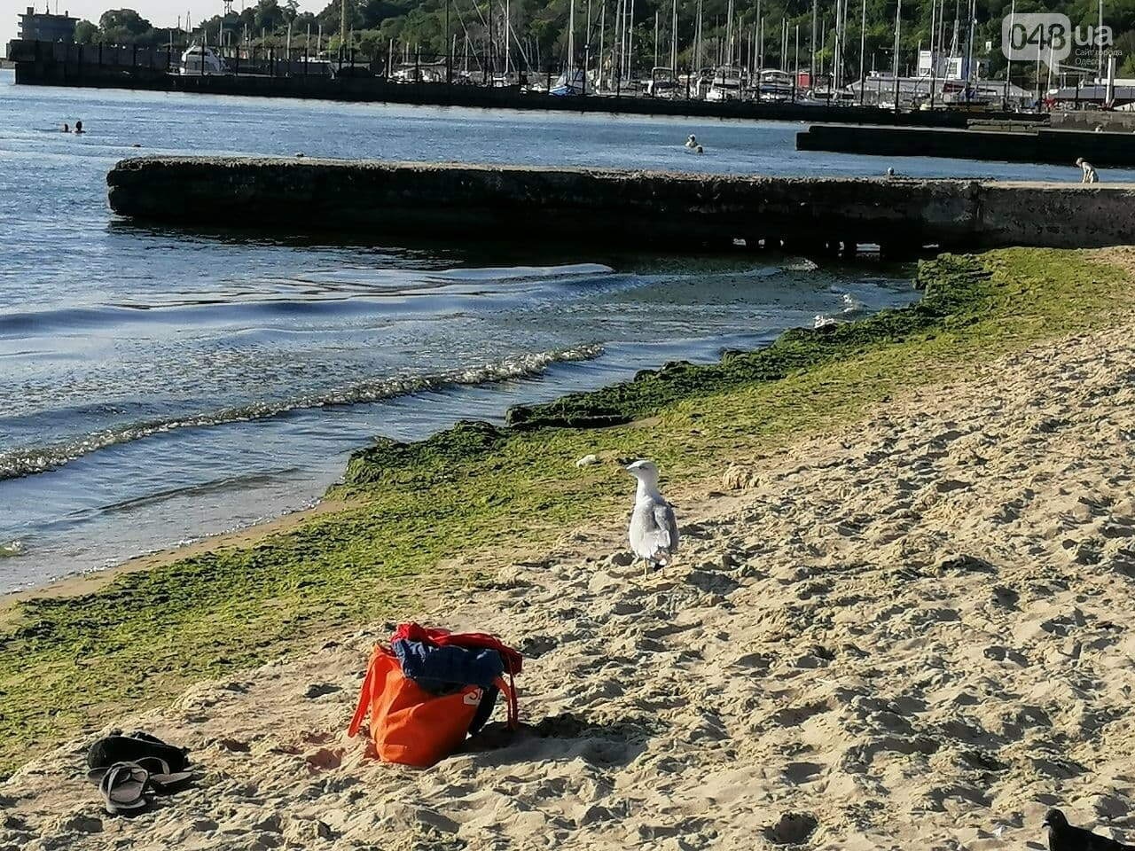 Что происходит в первый день осени на одесском пляже,- ФОТОРЕПОРТАЖ, фото-17