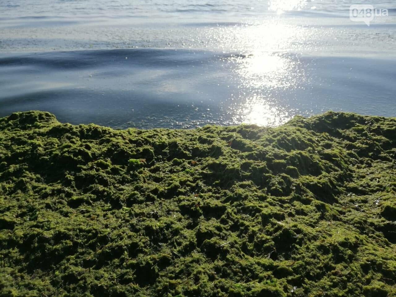 Что происходит в первый день осени на одесском пляже,- ФОТОРЕПОРТАЖ, фото-18
