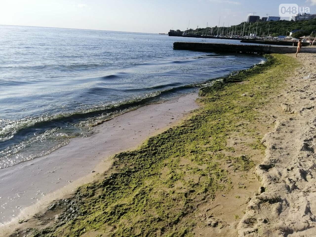 Что происходит в первый день осени на одесском пляже,- ФОТОРЕПОРТАЖ, фото-19