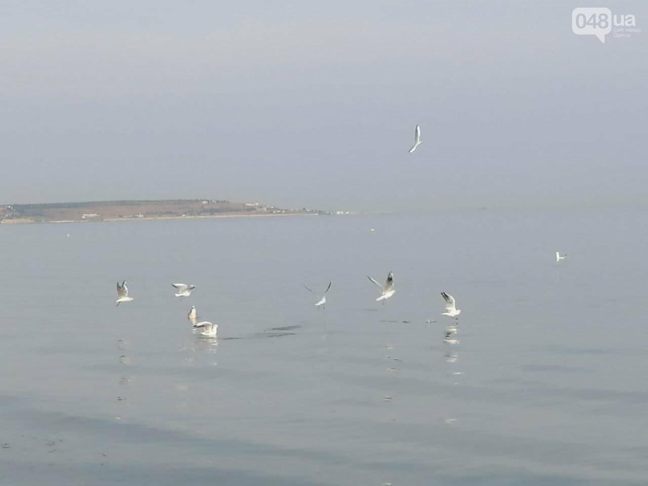На пляжах Одессы начался бархатный сезон,- ФОТОРЕПОРТАЖ, фото-21