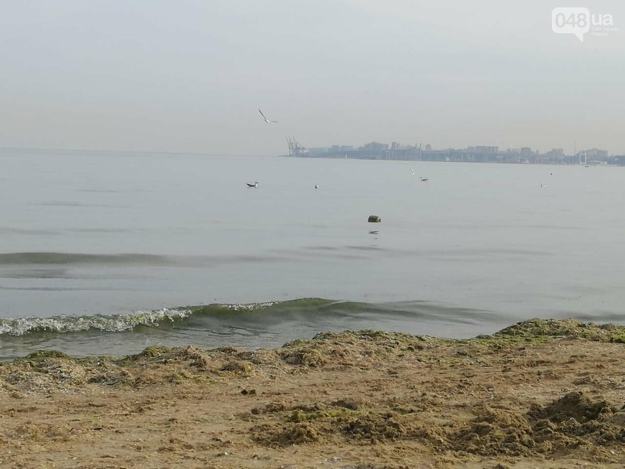 На пляжах Одессы начался бархатный сезон,- ФОТОРЕПОРТАЖ, фото-19