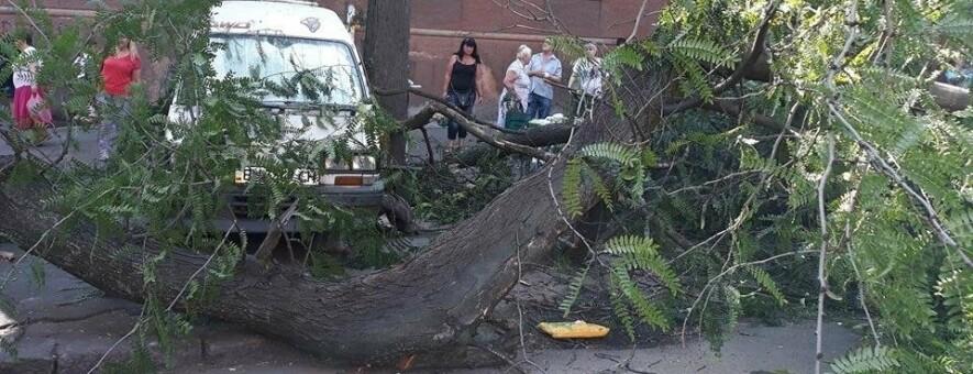 В центре Одессы рухнула часть дерева на тротуар, - ФОТО