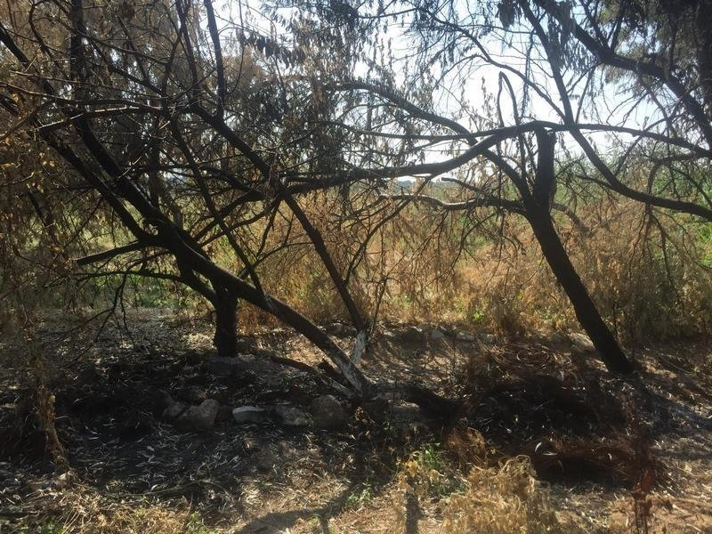 Неизвестные уничтожают растительность на одесском лимане (ФОТО), фото-10