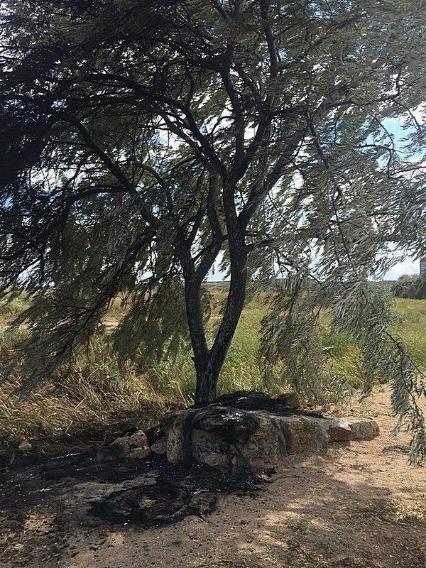 Неизвестные уничтожают растительность на одесском лимане (ФОТО), фото-6