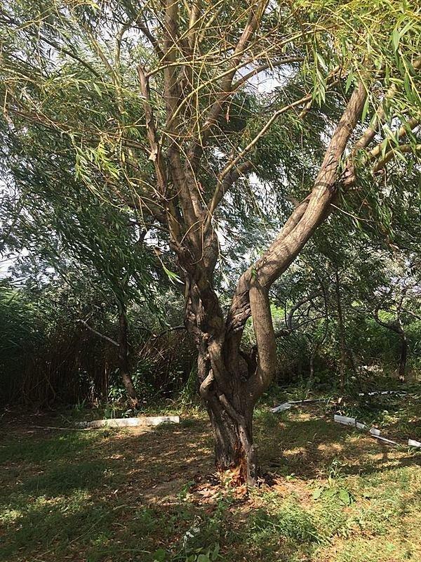 Неизвестные уничтожают растительность на одесском лимане (ФОТО), фото-4