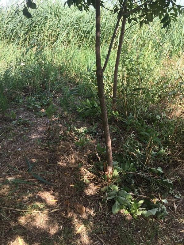 Неизвестные уничтожают растительность на одесском лимане (ФОТО), фото-1