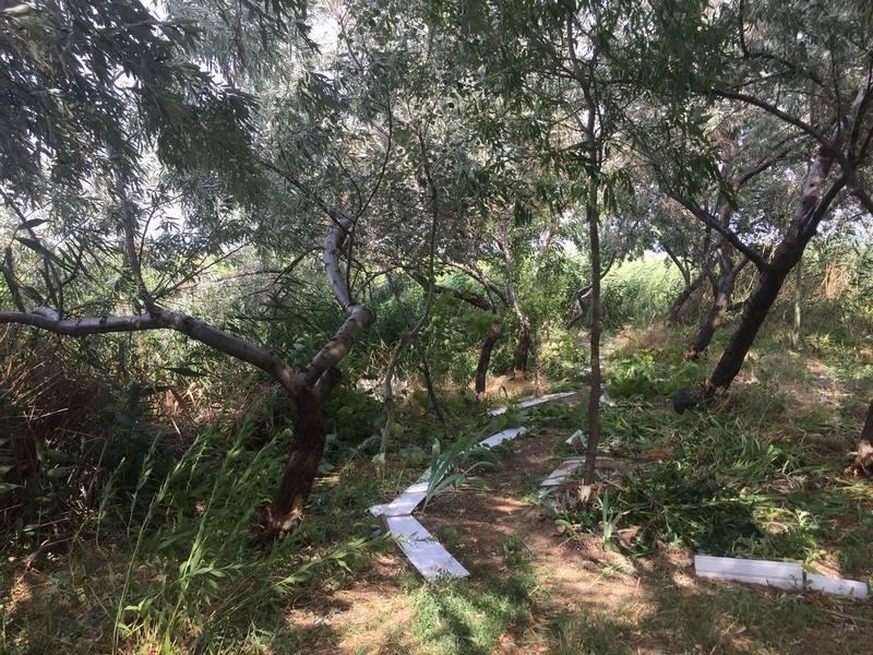 Неизвестные уничтожают растительность на одесском лимане (ФОТО), фото-3