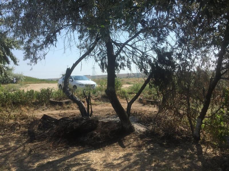 Неизвестные уничтожают растительность на одесском лимане (ФОТО), фото-9