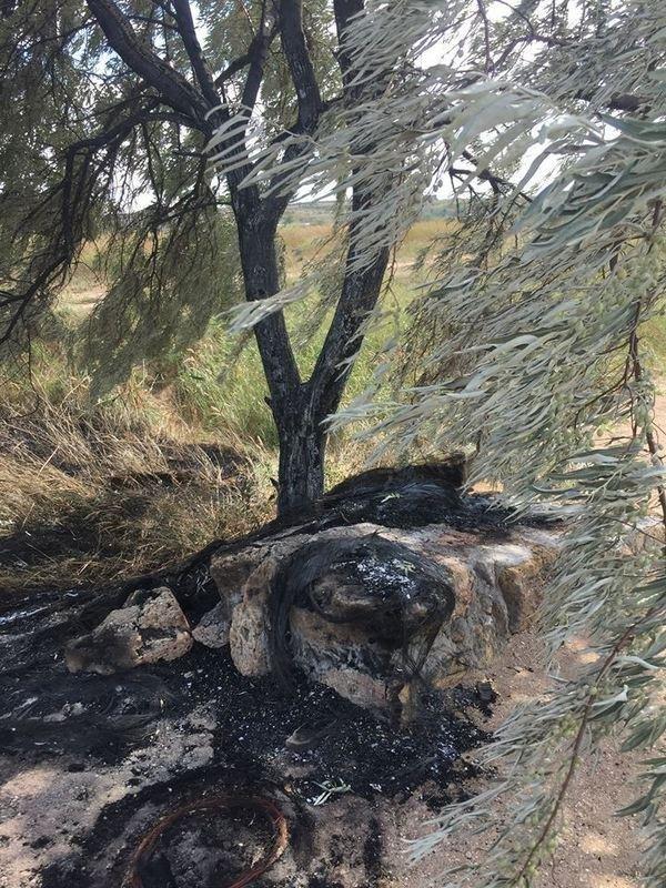 Неизвестные уничтожают растительность на одесском лимане (ФОТО), фото-5