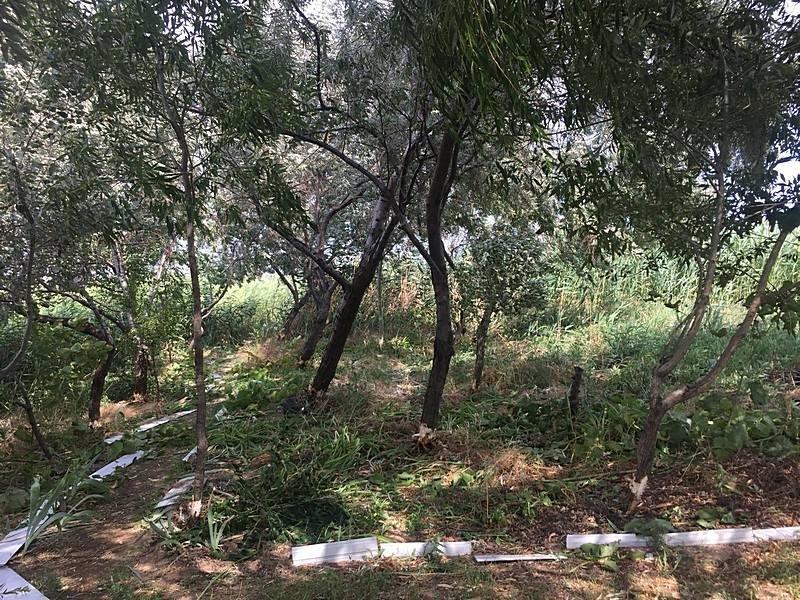 Неизвестные уничтожают растительность на одесском лимане (ФОТО), фото-2