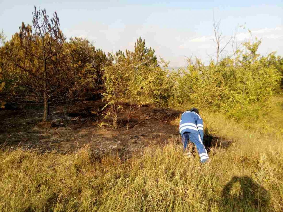 В Одесской области пожар в сосновом лесу тушили самолетом (ФОТО), фото-2
