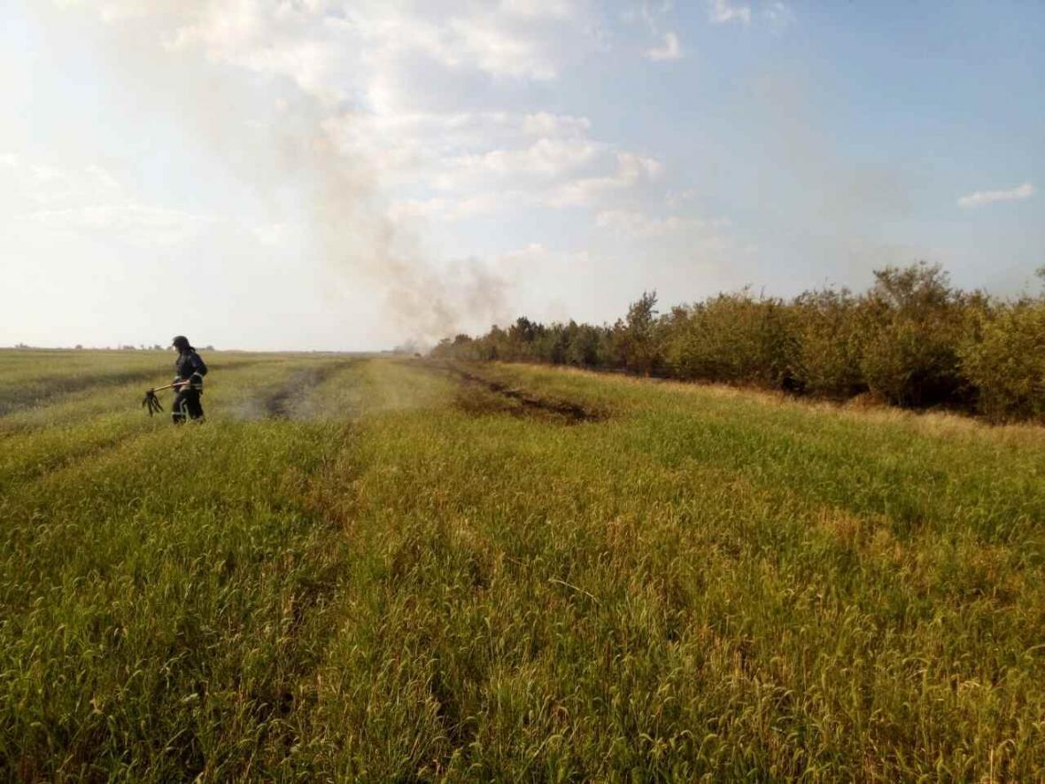 В Одесской области пожар в сосновом лесу тушили самолетом (ФОТО), фото-3