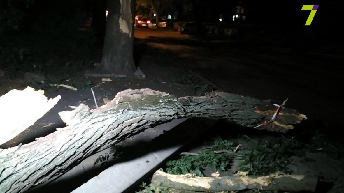 В Одессе упавшее дерево придавило прохожих (ФОТО), фото-1