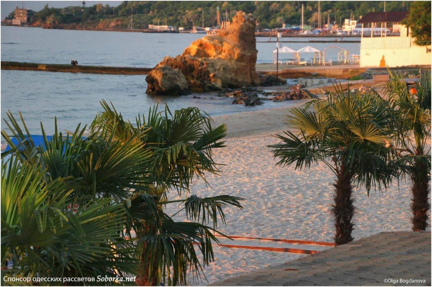 На одесском пляже высадили пальмы как в Египте, - ФОТО, фото-2