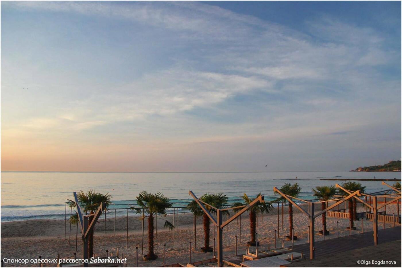 На одесском пляже высадили пальмы как в Египте, - ФОТО, фото-1