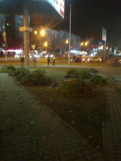 """На поселке Котовского в Одессе - """"кладбище"""" сосен, брошенных торговцами, - ФОТО , фото-4"""