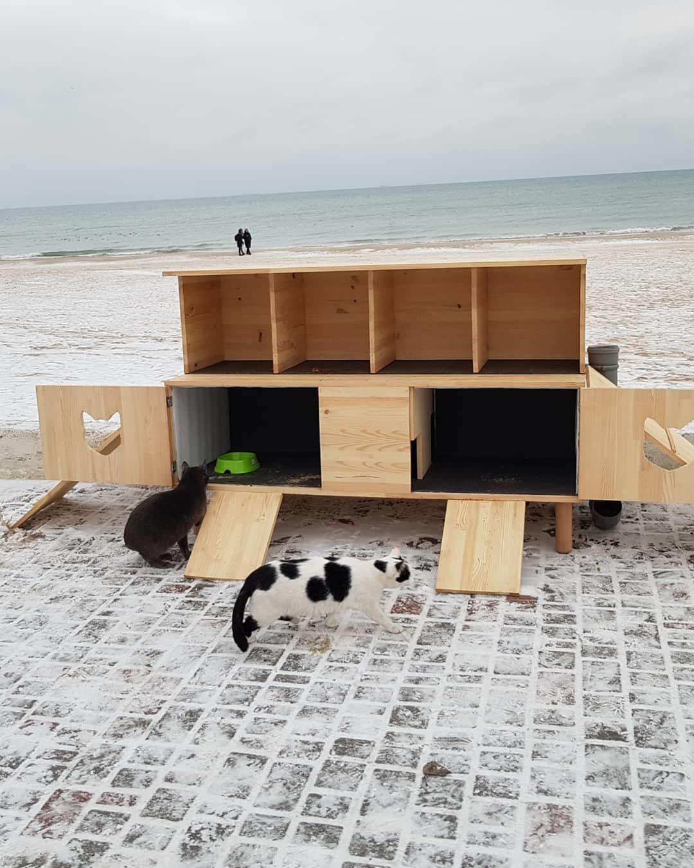 В Одессе строят дома котикам на зиму, - ФОТО, фото-3