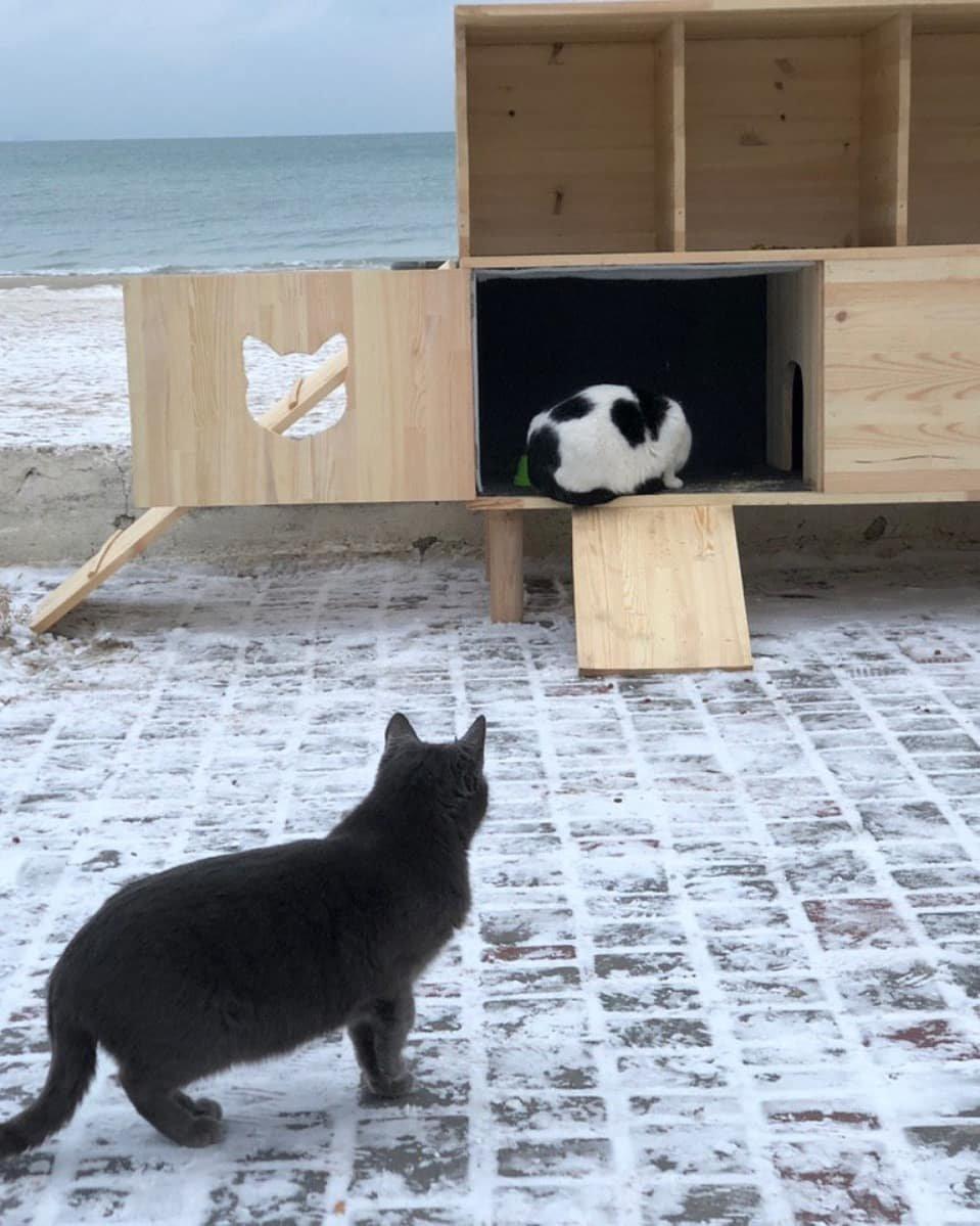 В Одессе строят дома котикам на зиму, - ФОТО, фото-4