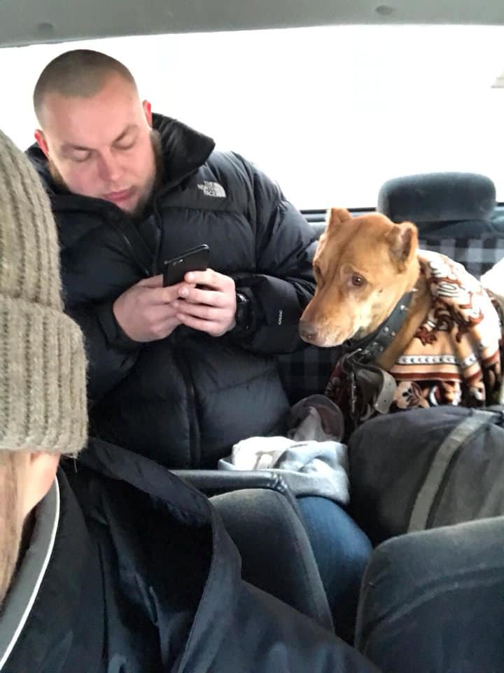 """Люди хуже зверей: в Одесской области у хозяев забрали """"домашнюю собачку"""", - ФОТО, фото-3"""