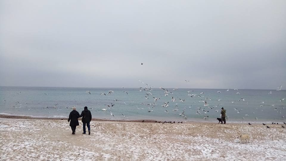 Восхитительный зимний пляж показал одессит в соцсетях, - ФОТО, фото-7, Фото: Иван Бошку