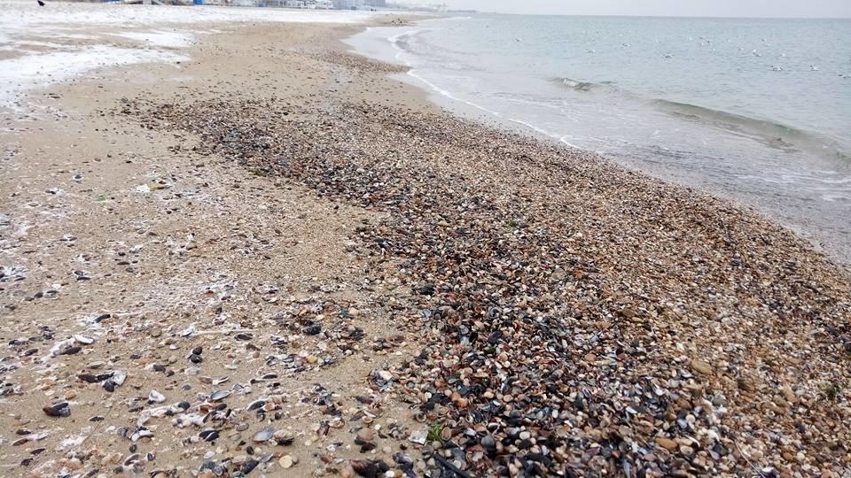 Восхитительный зимний пляж показал одессит в соцсетях, - ФОТО, фото-11, Фото: Иван Бошку
