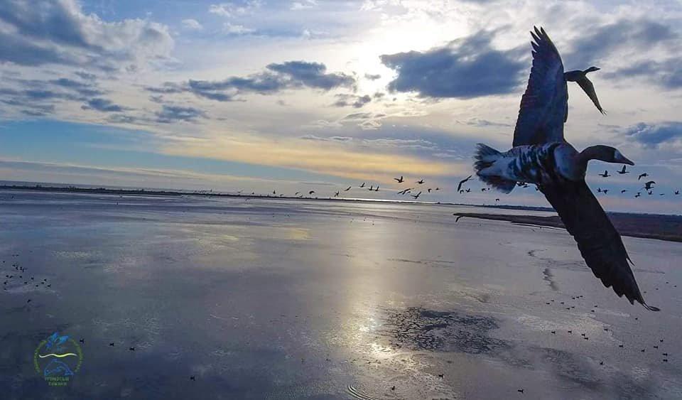 Дикие птицы пролетели более 5 тысяч километров, чтобы зимовать в Одесской области, - ФОТО, фото-4, Фото: Иван Русев