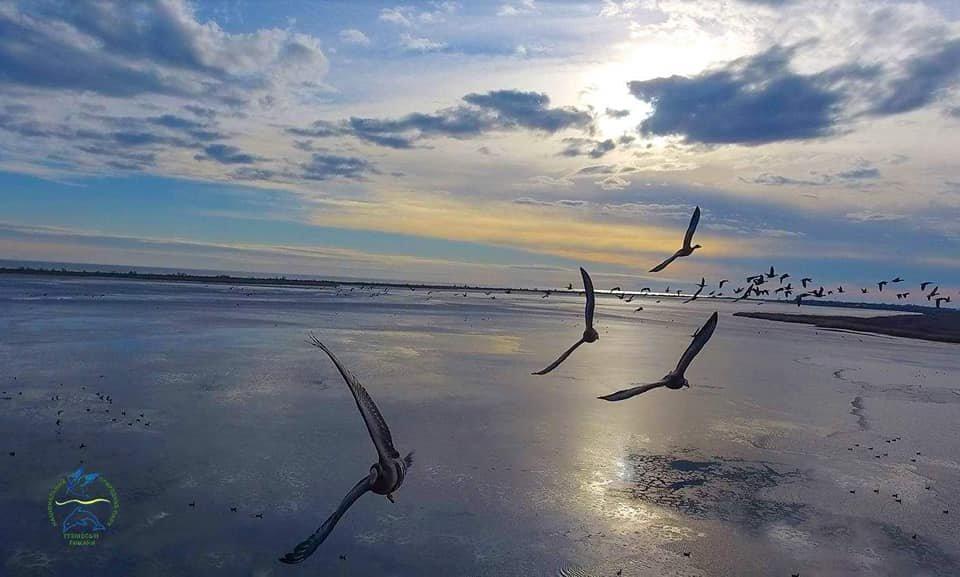 Дикие птицы пролетели более 5 тысяч километров, чтобы зимовать в Одесской области, - ФОТО, фото-3, Фото: Иван Русев