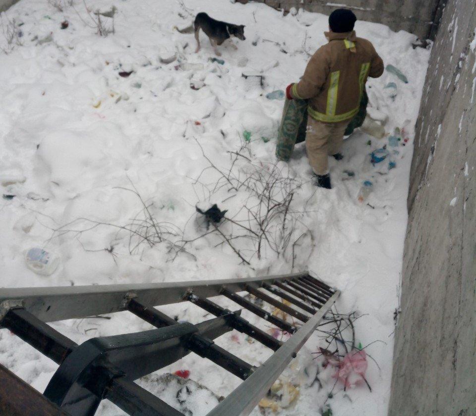 Животные едва не поплатились жизнью за безответственность людей в Одесской области, - ФОТО, фото-1, Фото: ГСЧС