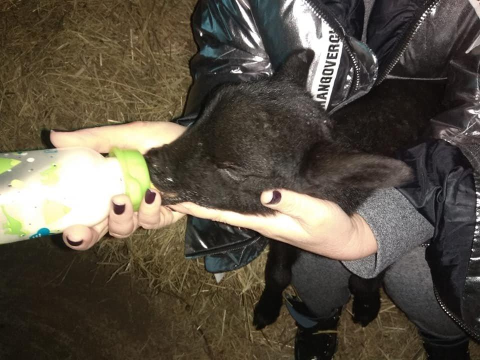"""Волонтеры рассказали, как живут под Одессой овечки из """"фуры смерти"""", - ФОТО, фото-4, Фото: Animal-SOS-Odessa"""
