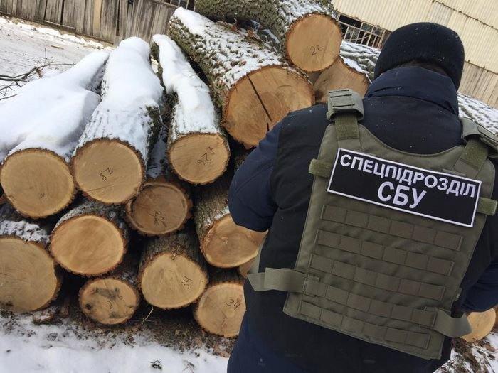 """""""Предприимчивые"""" одесские лесники продавали санитарную древесину со скидкой 50%, - ФОТО, фото-4"""