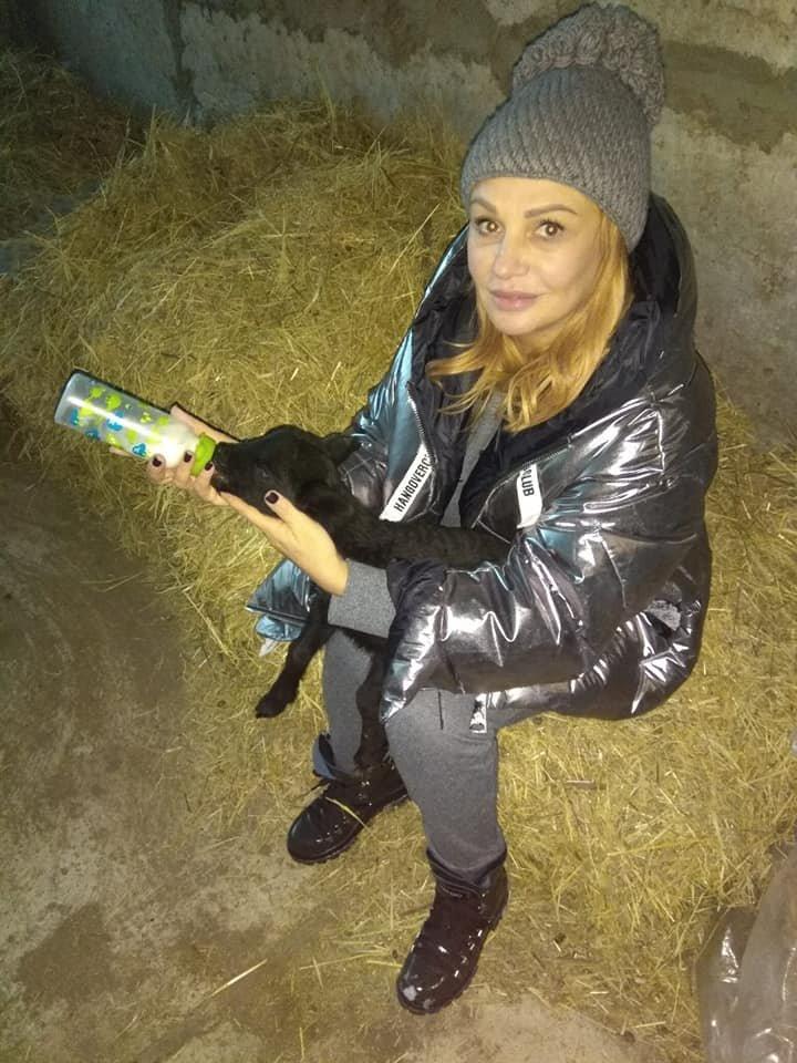 """Волонтеры рассказали, как живут под Одессой овечки из """"фуры смерти"""", - ФОТО, фото-6, Фото: Animal-SOS-Odessa"""