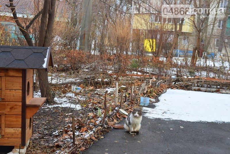 Еще больше котопунктов: под Одессой установили дом для котов, - ФОТО, фото-3