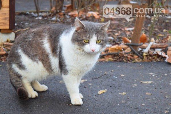 Еще больше котопунктов: под Одессой установили дом для котов, - ФОТО, фото-1