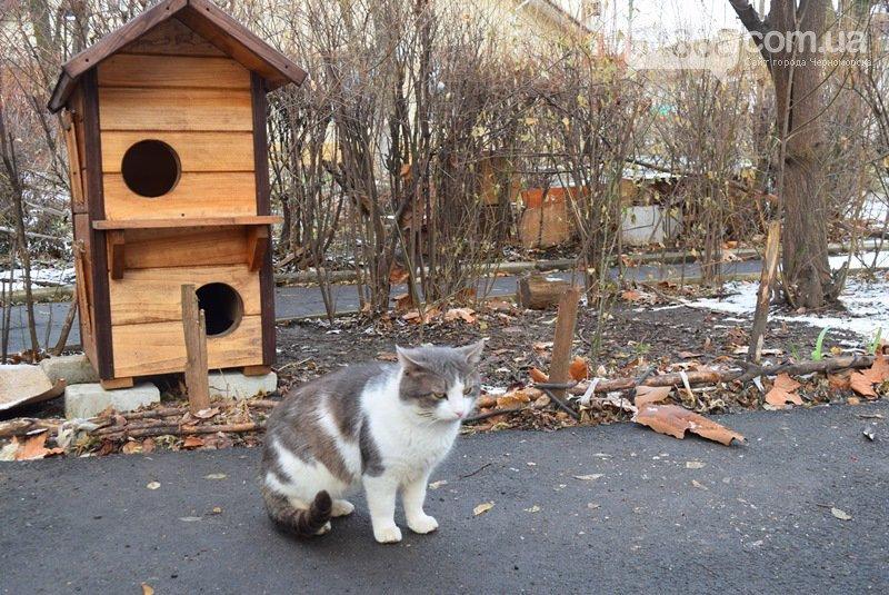 Еще больше котопунктов: под Одессой установили дом для котов, - ФОТО, фото-4