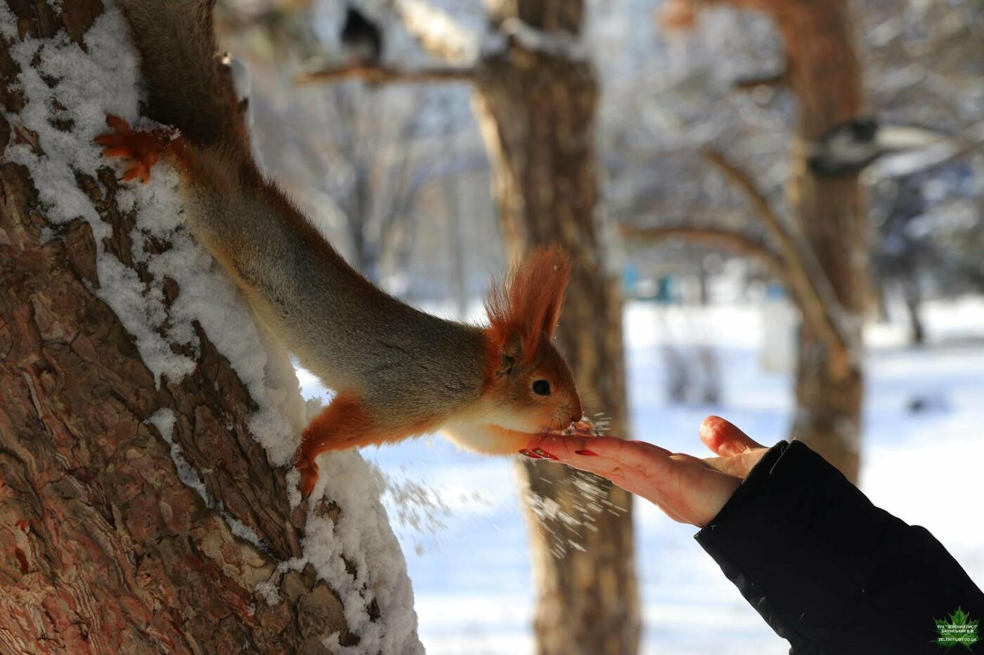 Одессит показал зиму в парке Победы, - ФОТО, фото-1, Фото: Владислав Балинский
